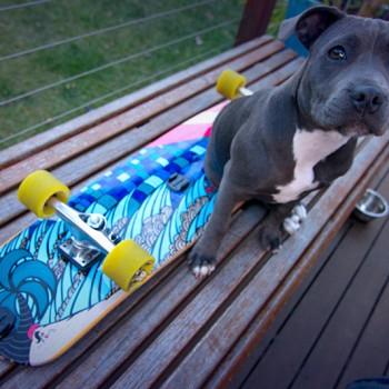 minion-protecting-dolphin-cuiser-surfin-skateboard